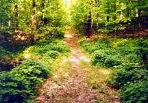 Image courtesy of ghostvillage.com